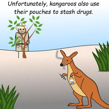 Kangaroos by Pipanni